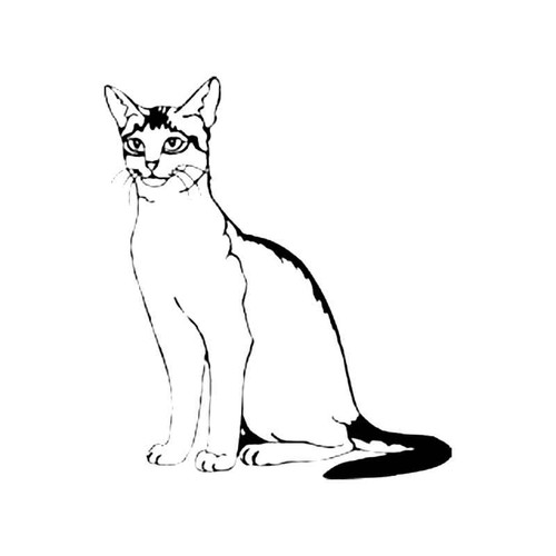 Abyssinian Cat S Decal