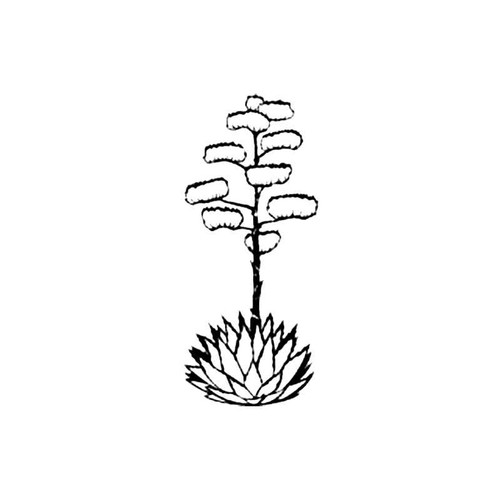 Agave S Decal