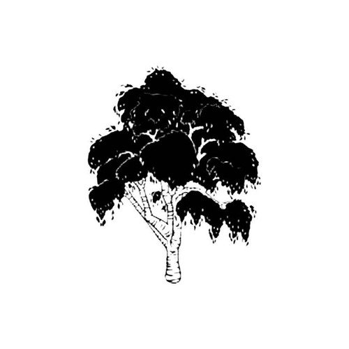 Birch Tree B S Decal
