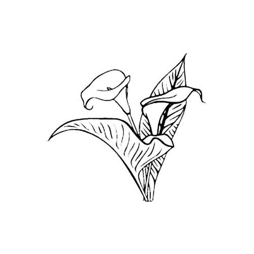 Cala Lily S Decal
