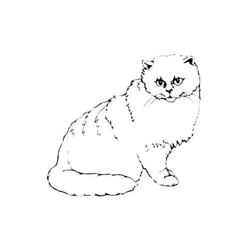 Chinchilla Cat S Decal