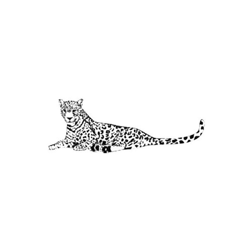 Leopard S Decal