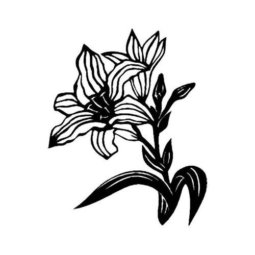 Lily B S Decal