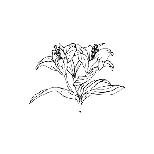 Lily S Decal