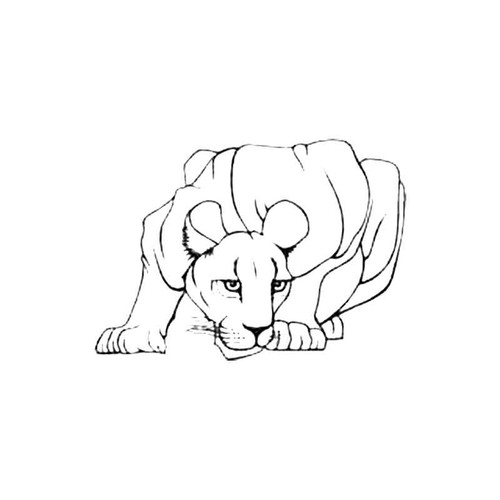 Lioness S Decal
