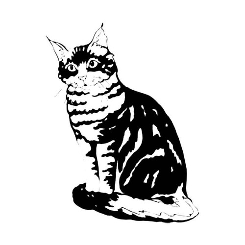 Maincoon Cat S Decal
