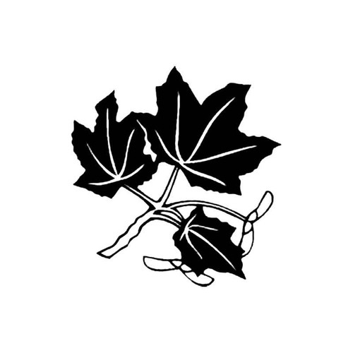 Maple Tree Branch S Decal