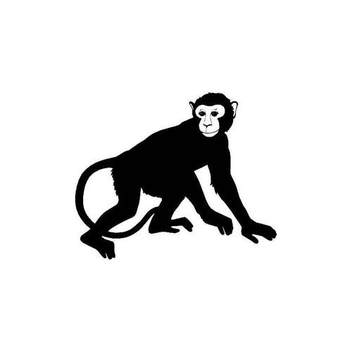 Monkey Decal