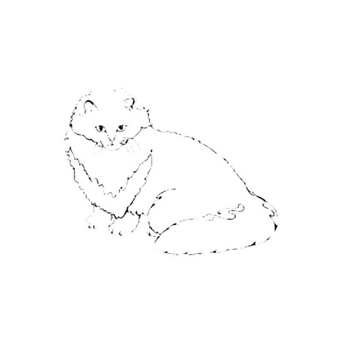 Persian Cooper Eyed Cat S Decal