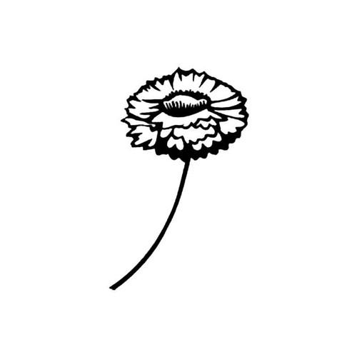 Strawflower S Decal