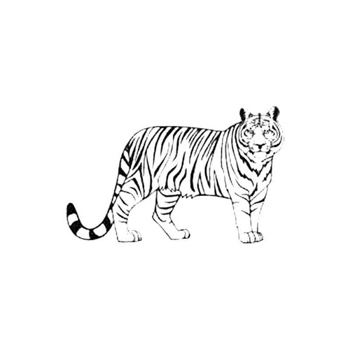Tiger S Decal