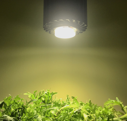 LED light horticulture growing light