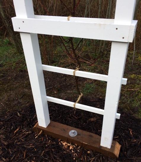 Penetrator anchor installed into trellis base