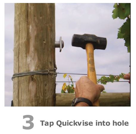 Quickvise for trellis post anchor
