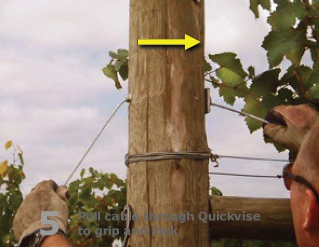 Vineyard trellis anchoring step 5