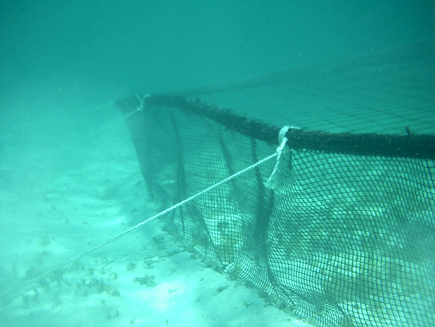 Anchoring for aquaculture farming such as conch pens