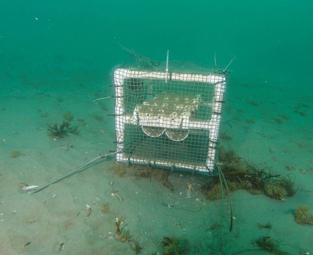 Fish cage anchored underwater with arrowheads
