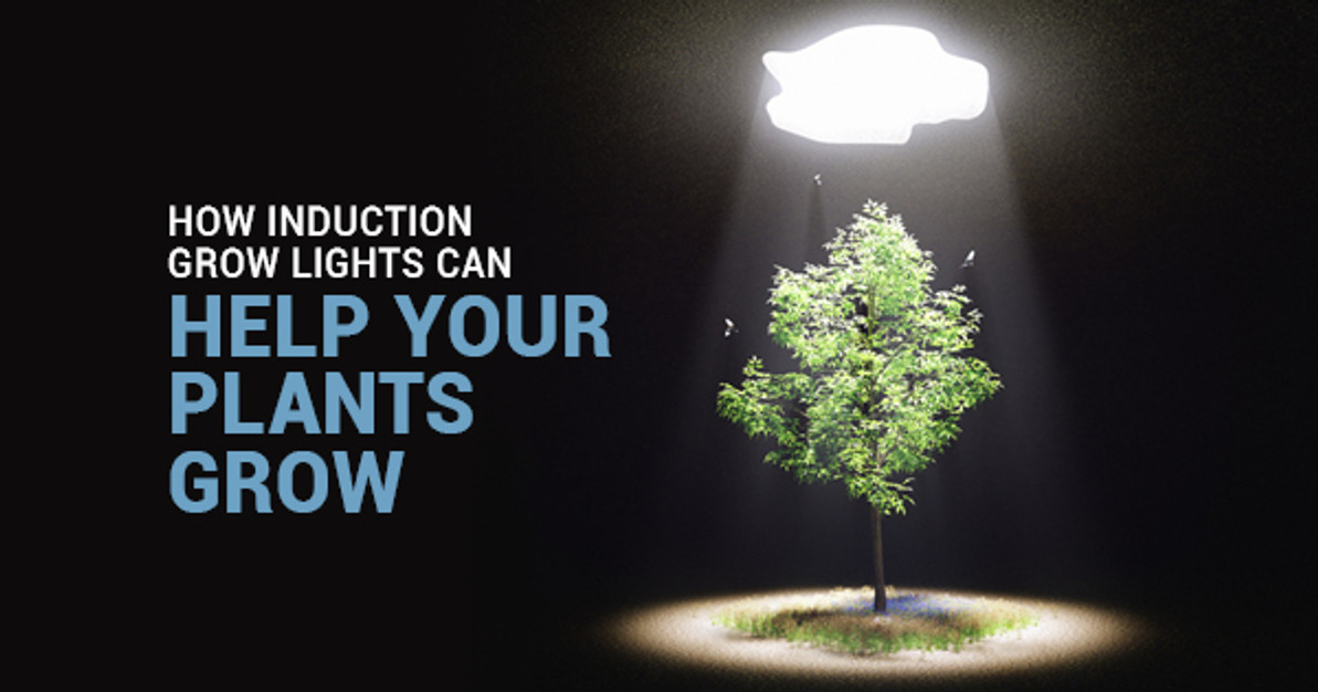 How Induction Grow Lights Can Help Your Plants, You Know, Grow
