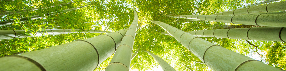 natural moso bamboo for charcoal
