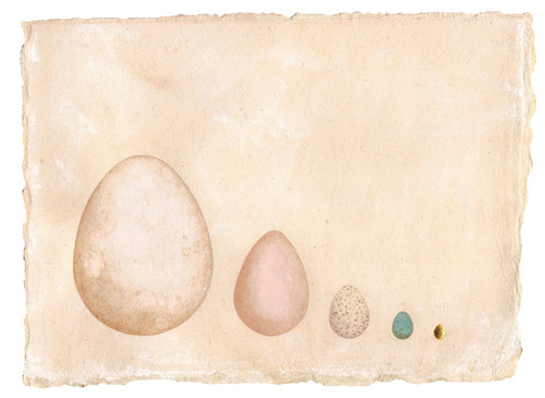 Their eggs by G. Amaranta Peña Carrasco_2020_Handmade watercolours and gilt egg with 22 ct gold leaf on hemp paper_Miniature Painting