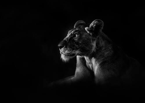 Cry of the Kalahari_Chris Fallows_2020_Fine Art Photography: Monochrome