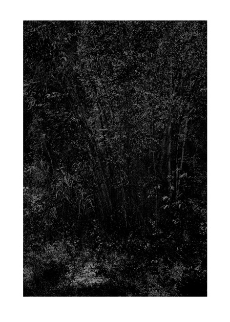 'White Noise - WN414', 'Katya Shkolnik', 2017, 'Giclee', 'Fine Art Print', 'Hahnemuhle Museum Etching paper', bamboo, 'wind in a bamboo forest', 'bamboo forest', 'Guilin mountains', China,  print, photography