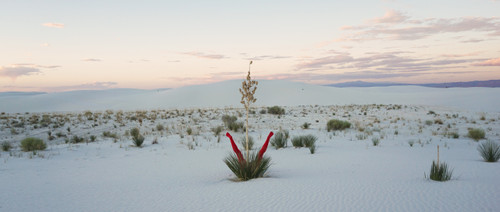 Yucca's Dream by Dabal Kim. 2018. Performance Photograph in White Desert(USA) & Pigment Print. Photograph edition 1/30.