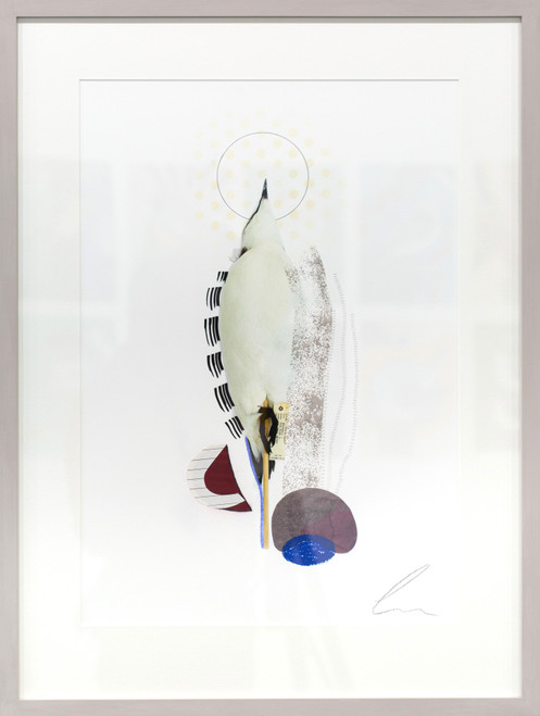 Razorbill (Rising Scottish Sea Temperatures) by Lucy Stevens. 2021. Photography, mixed media and collage on 310gsm cotton rag paper. Abstract.