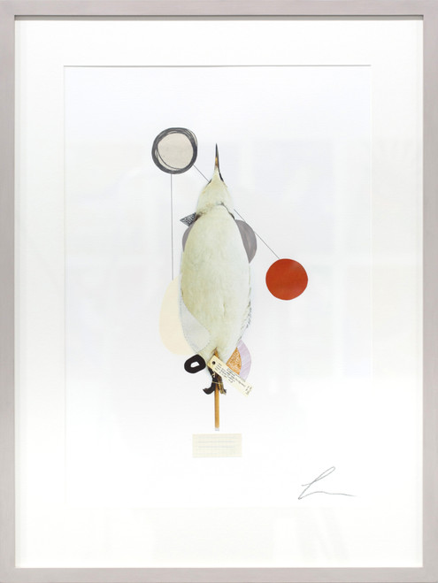 Guillemot (Rising Scottish Sea Temperatures) by Lucy Stevens. 2021. Photography, mixed media and collage on 310gsm cotton rag paper. Abstract.
