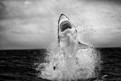Air Jaws by Chris Fallows. 2002. Fine Art Photography: Monochrome