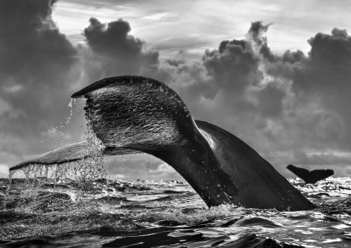 A Tail of Two Halves by Chris Fallows. 2020. Fine Art Photography: Monochrome