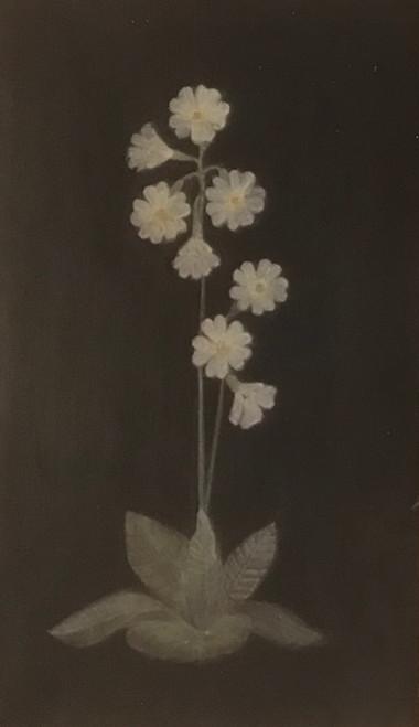 Cowslip by Elisabeth H.J Den Boer. 2021. Egg tempera on gesso panel.