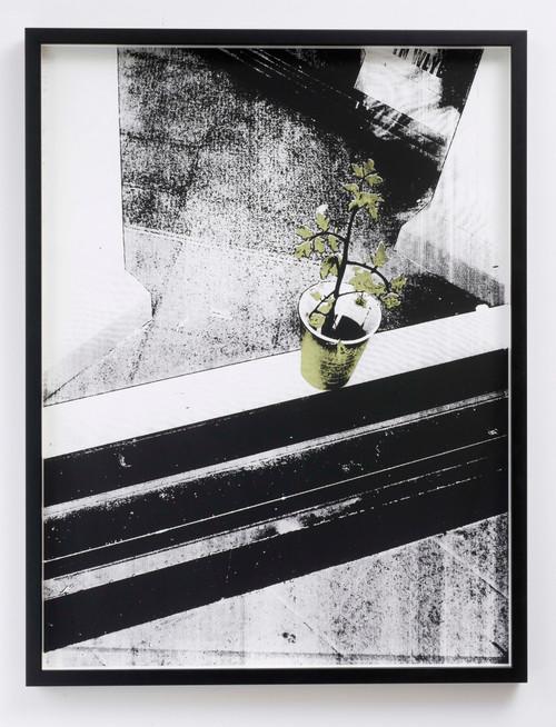 Plant Beyond the Window_Shan Hur_2012_Digital silk print, framed
