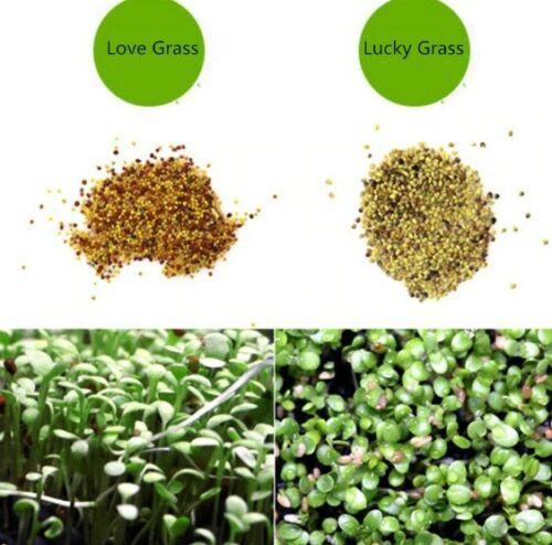 Aquarium Grass Seeds (Lucky Clover) Aquarium plant