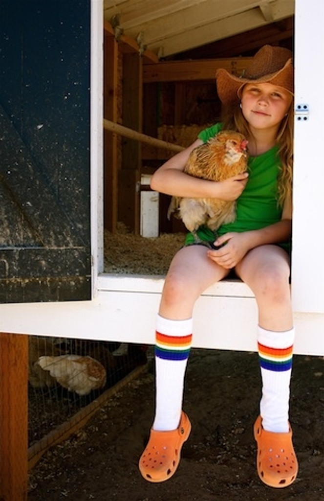 my chickens love when i hold them when wearing my pride socks