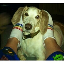 wear your no show pride socks when hanging out with your dog/