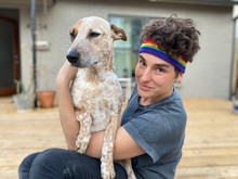 dogs and lesbians.  pride socks in austin texas