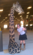 is that giraffe real?  i sure know he is checking out my black rainbow striped pride socks.