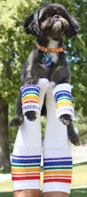 flying high with my dog both sporting the pride socks