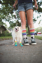 gray rainbow pride socks midcalf with fee fee on our walks