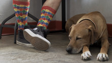 a man and his best friend, pooch and pride socks