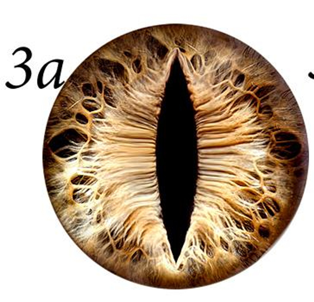 Fantasy Glass Cabochon Hand Printed Eyes Flat Back Brown  3A