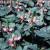 Chelone lyonii 'Hot Lips' - Pink Turtlehead