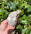 24 Guinea Keets (Hatchery  Choice) Shipped Only