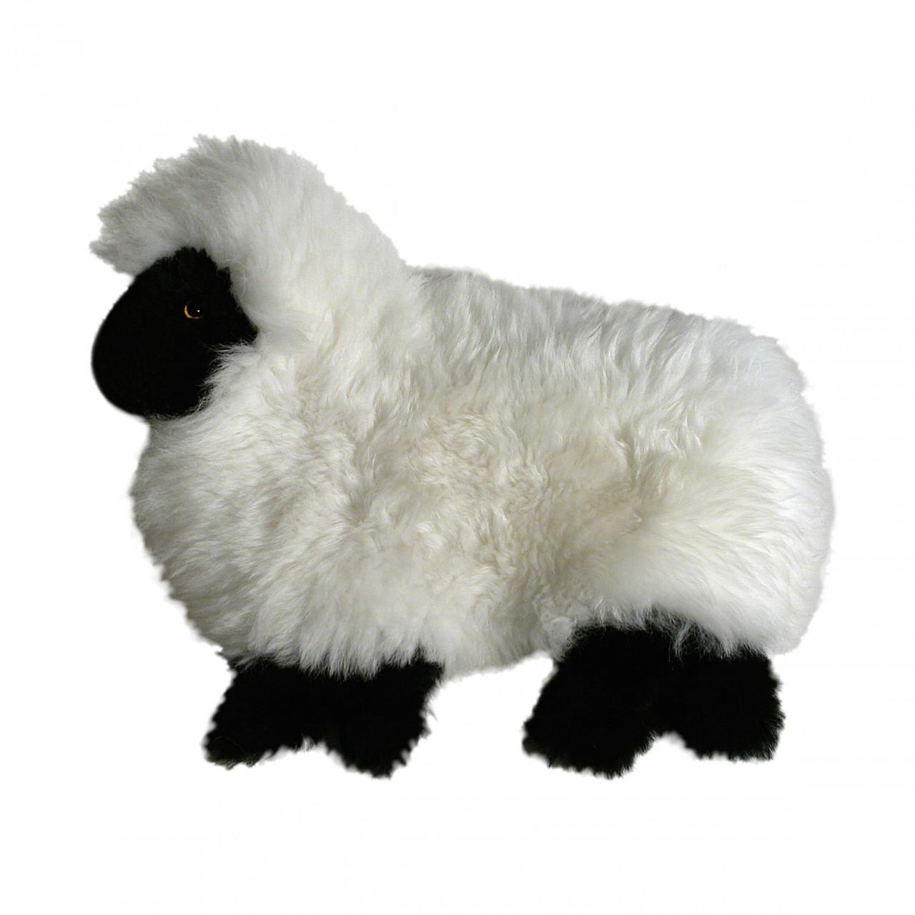 PJ Case Lamb