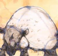 John Olsen, White Rhino