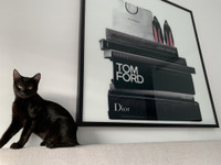 Black Cat with Fashion Books
