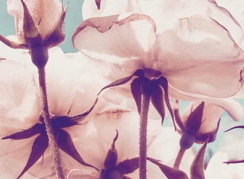 Flower image | Karen Tonna | Print Decor