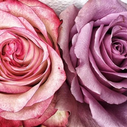 Flower image   Karen Tonna   Print Decor