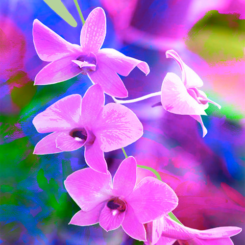 Jan Neil, Cooktown Orchid